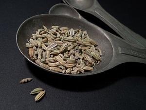 fenykl obecný semínka