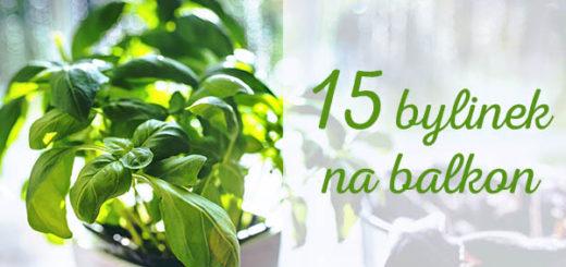 bylinky-na-balkon-tn