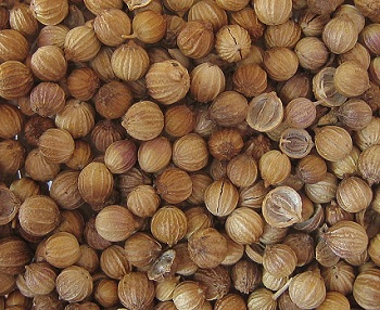 koriandr setý semínka