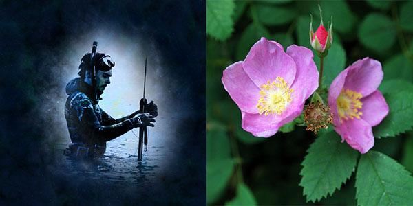 vodnar-ruze-kalifornska