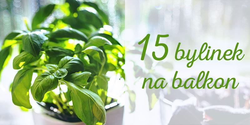 bylinky na balkon