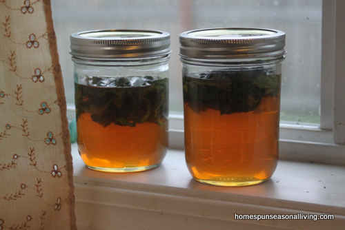 meduňkový med