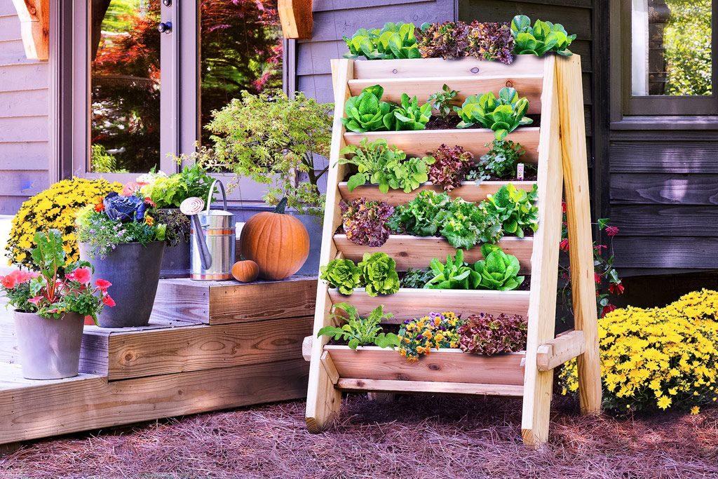 napady-na-bylinkove-zahradky1