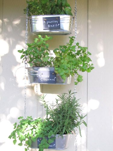 napady-na-bylinkove-zahradky10