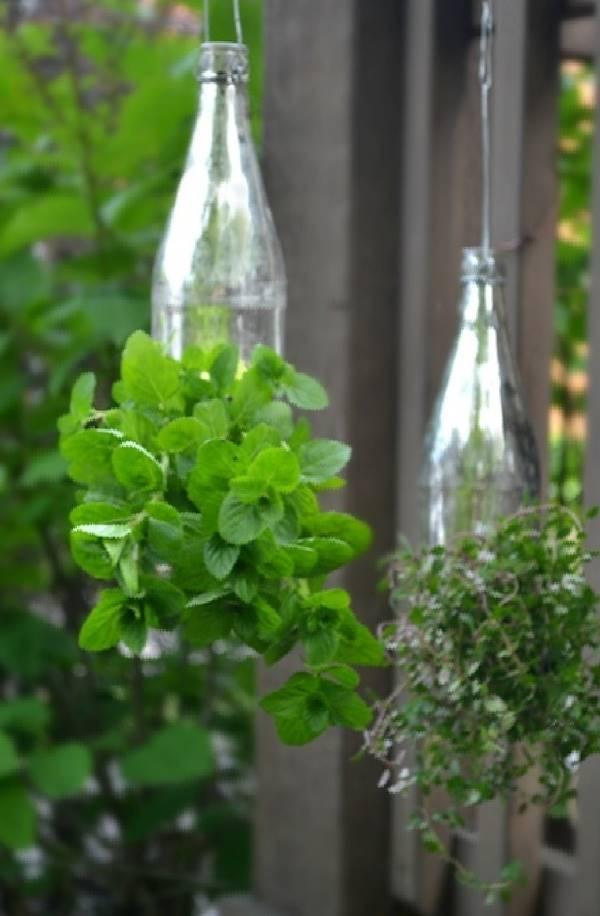 napady-na-bylinkove-zahradky19