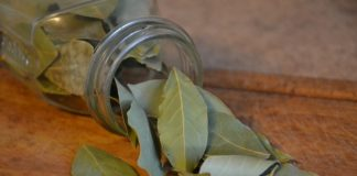 vavřín – bobkový list