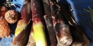 bambusové výhonky
