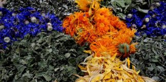 sušené bylinky