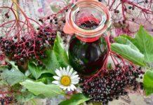 bylinky na kasel cerny bez