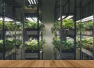 indoor pestovani