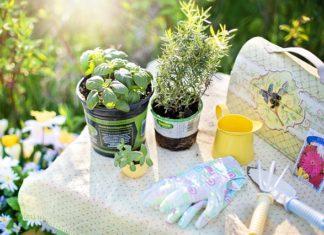 bylinkova zahradka