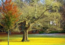 strom gingo