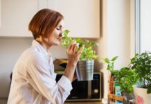 bylinky v kuchyni