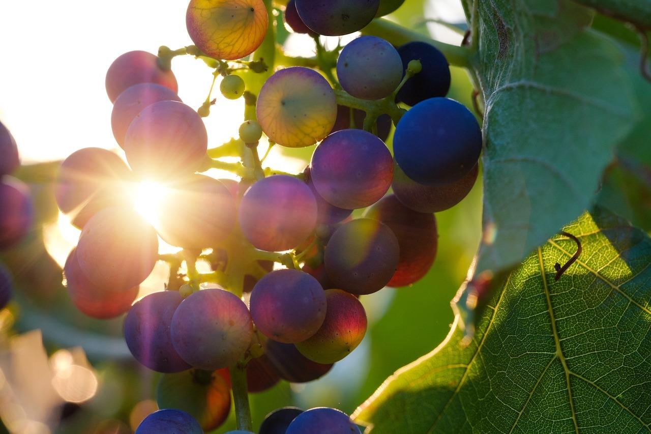 hroznove vino