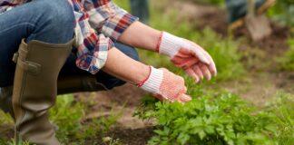 petrzel v zahrade