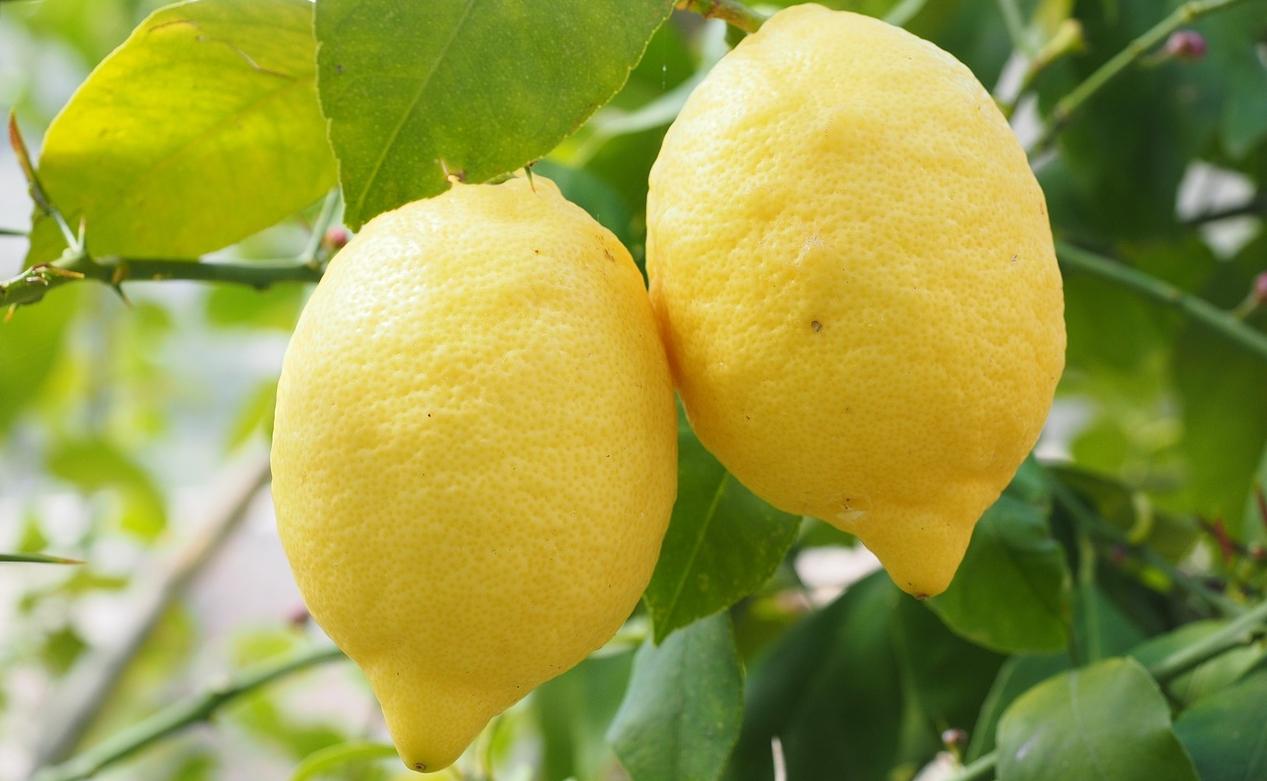 citrus limonovy