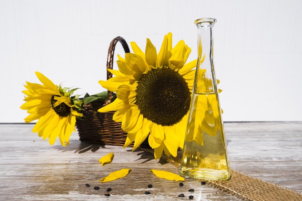 slunecnice rostlina