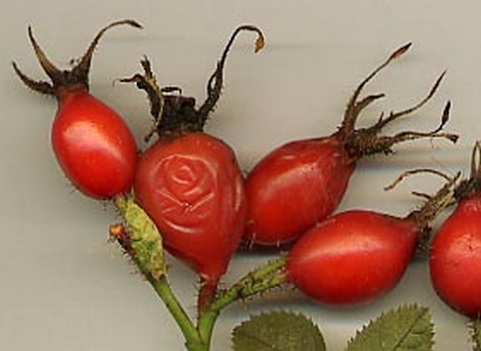 sipek plod